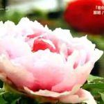 NHKスペシャル 2月22日腸内フローラまとめ
