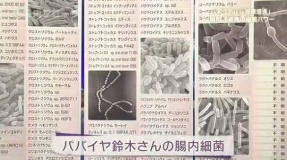 papaiyasuzukisan