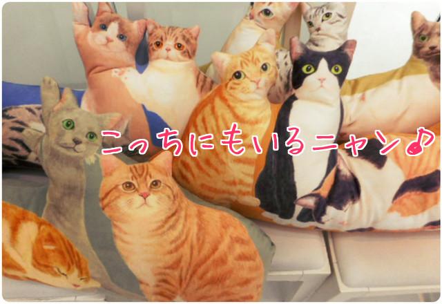 猫まみれクッション3