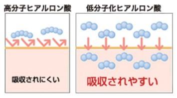 低分子ヒアルロン酸