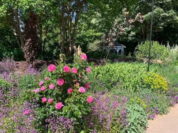 flowers and plants at raulston arboretum in raleigh
