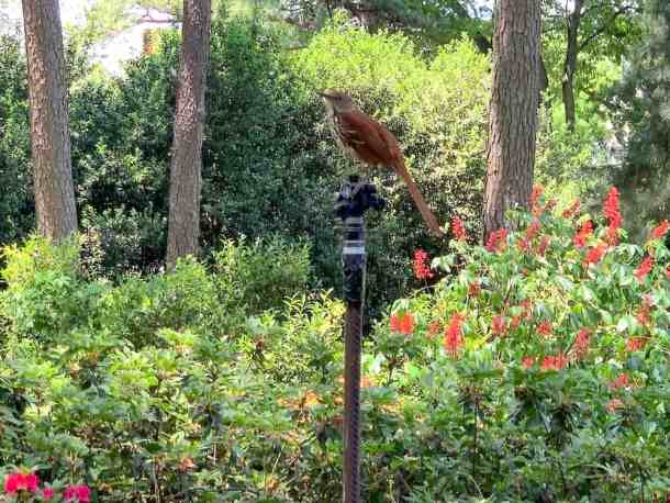 bird on sprinkler at WRAL Azalea Gardens