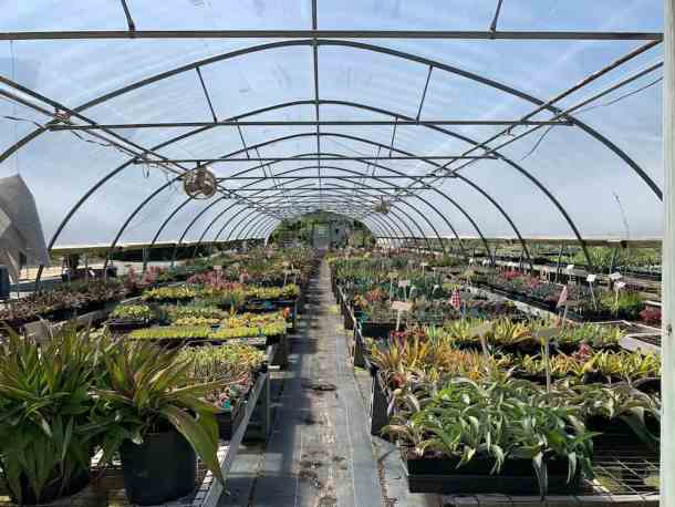 A large greenhouse full of plants at Plant Delights Nursery