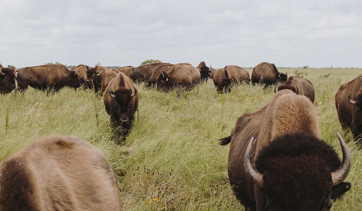 Roam Ranch