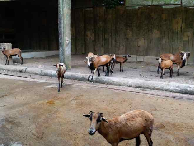All You Need to Know Before Going to Avilon Zoo Rizal with a Toddler