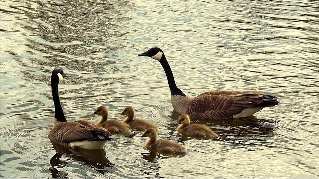 famille recomposée bien ordonnée