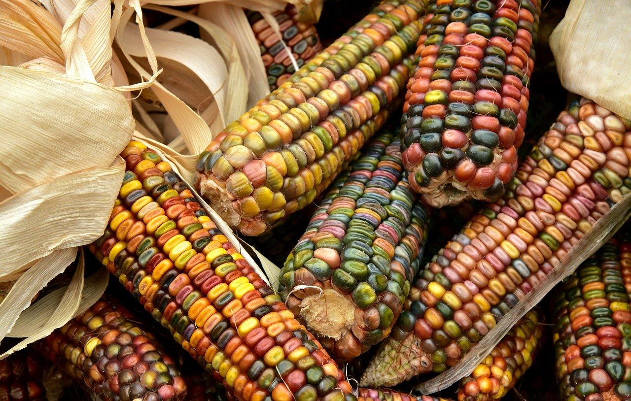OMC Agricultura y Covid-19