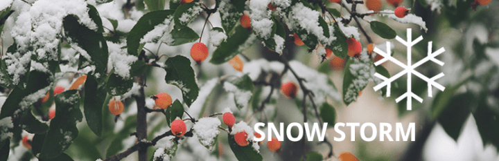 WordPress Snow Storm