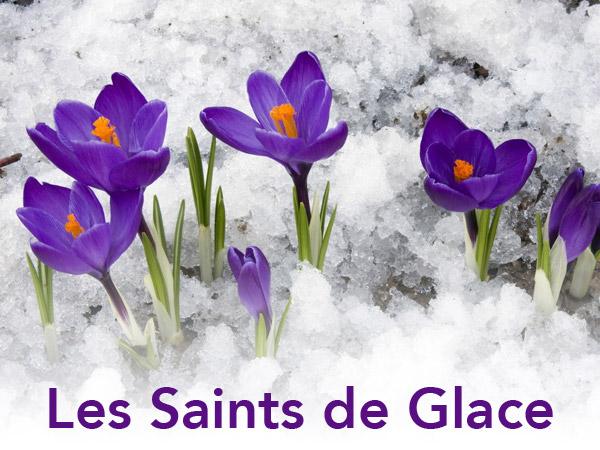 saints-de-glace-fleurs