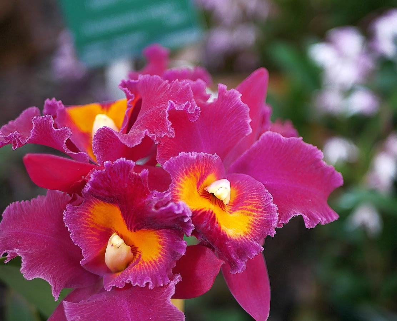 orchidee exposition jardin des plantes Paris