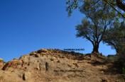 8. Vista presa des del sud del bastió, un cop aixecat els nivells superficials del marge que l'ocultava (foto Marcel Solé)