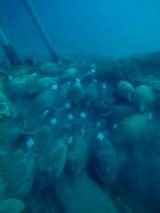 6. Vista del jaciment de Bou Ferrer. Fotografia: José Antonio Moya. Universitat d'Alacant