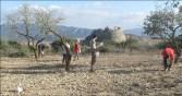 8. Prospecció als camps del nordoest. Fotografia: Equip Coll del Moro de Gandesa
