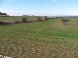 4. Imatge actual dels terrenys on es localitza la vil·la. Font: Servei d'Arqueologia i Paleontologia