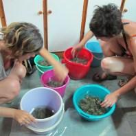 7. Experimento sobre la producción de tinte púrpura durante el proyecto PALAP. Fotografia: Equipo del Proyecto PALAP