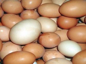 eggs-new2