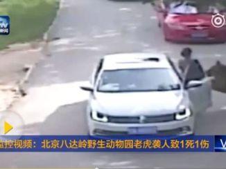 Footage shows a tiger charging at its victim. PHOTO: CCTV