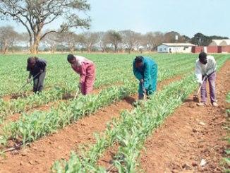 farm-plantation