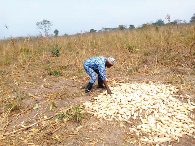 CEDAR, Kogi APPEALS train farmers
