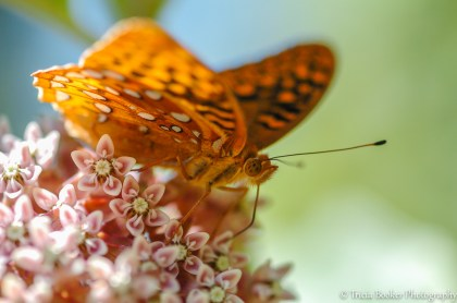 2012-06-08_CamButterfly_Booker_0024