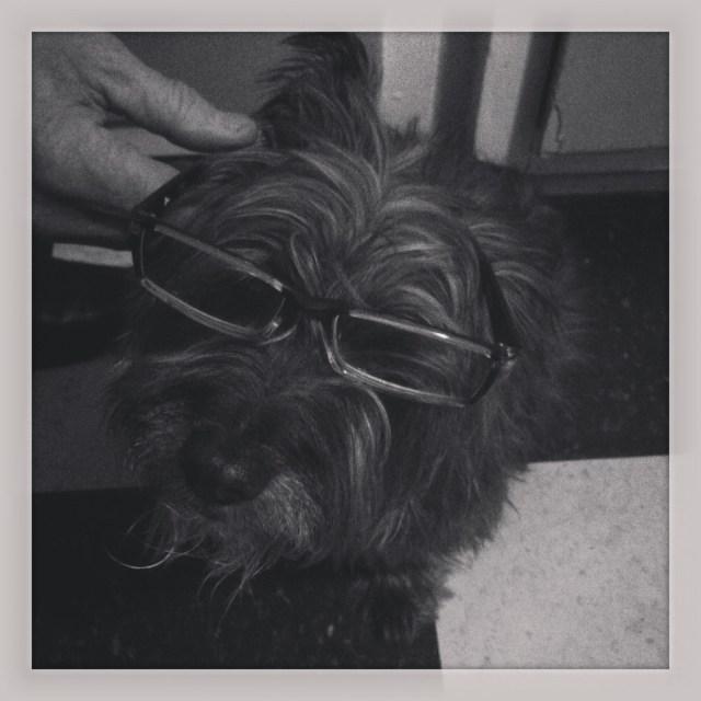 tet glasses