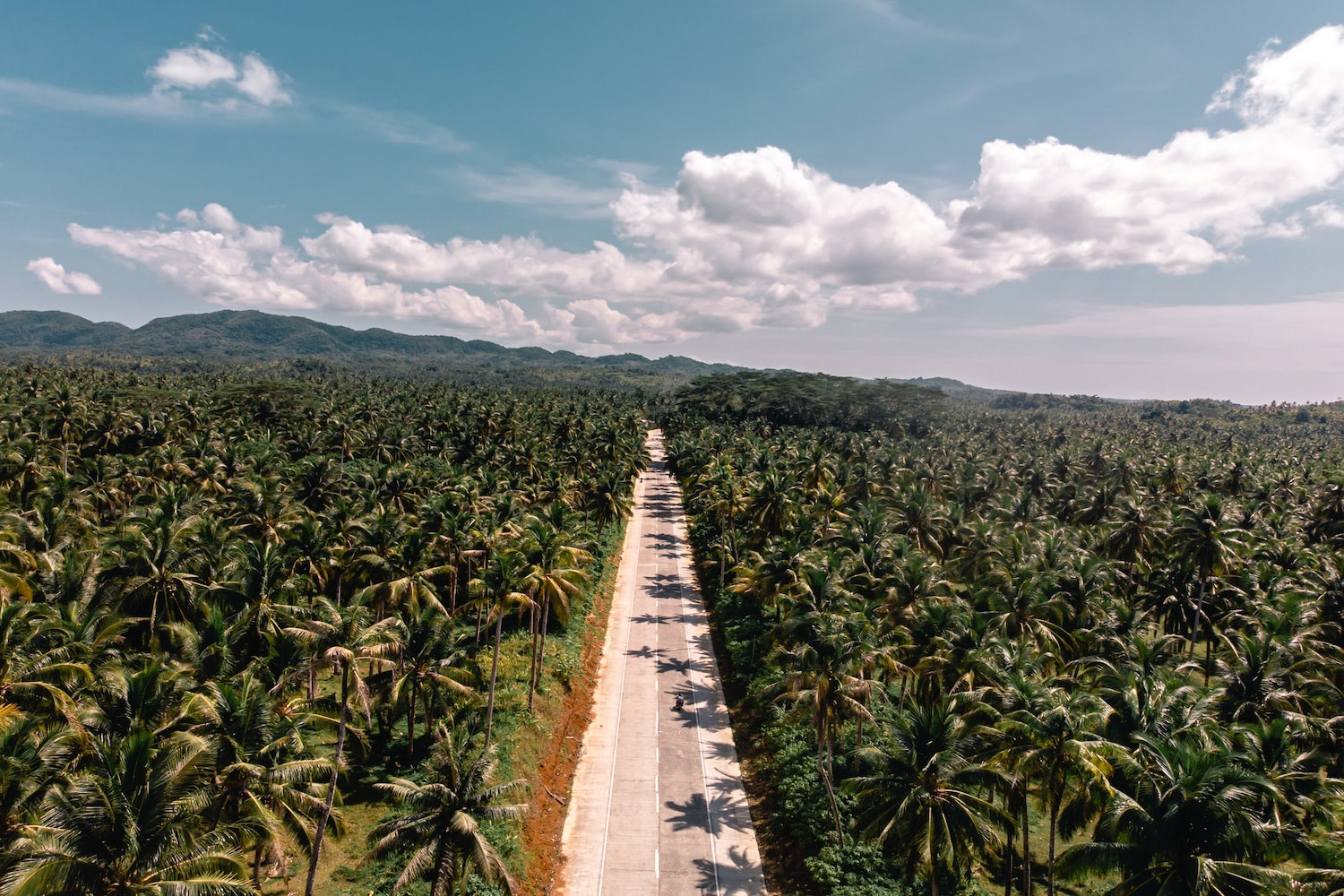 Long straight road full of palm trees, a blue cloudy sky, and mountains in the background