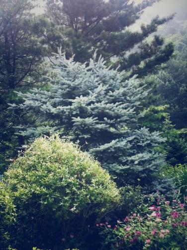 The Garden of Morning Calm http://www.visitkorea.or.kr/enu/SI/SI_EN_3_1_1_1.jsp?cid=264212