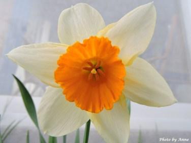 Narciss6
