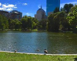 boston commons - Five things you must do in Boston