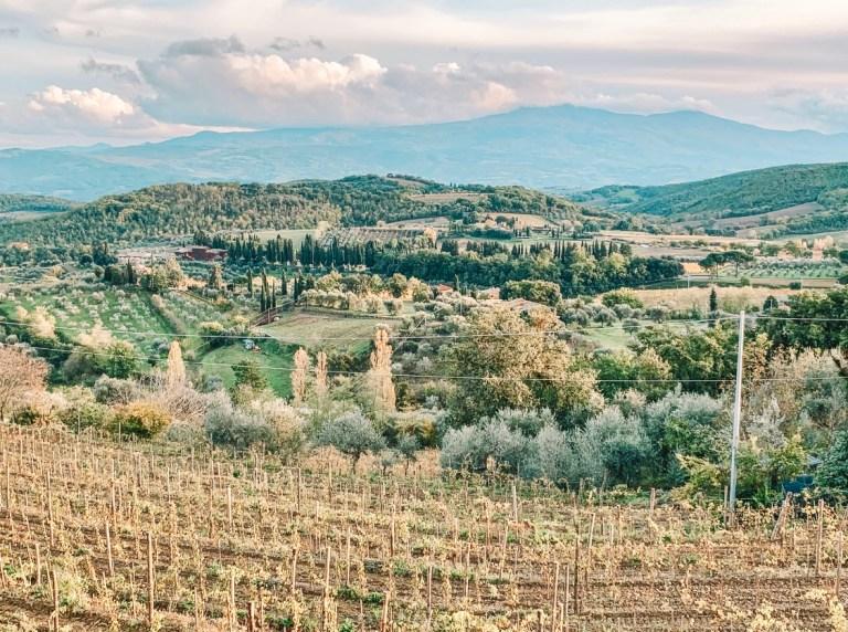 img 5415 - Tuscan Wine Tour