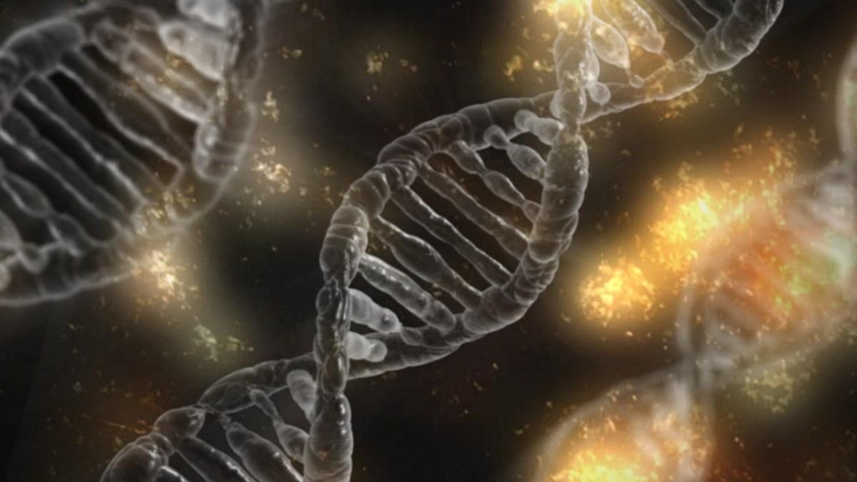 Hawking kết hợp thuyết của Darwin sẽ đưa con người tiếp tục tiến hóa đến đâu? Con người tiếp tục tiến hóa sẽ trở thành con gì?