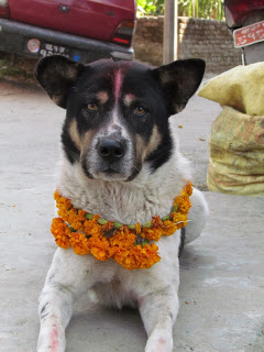 Tihar, Festival of Lights / Day Two- Dog Tika Day
