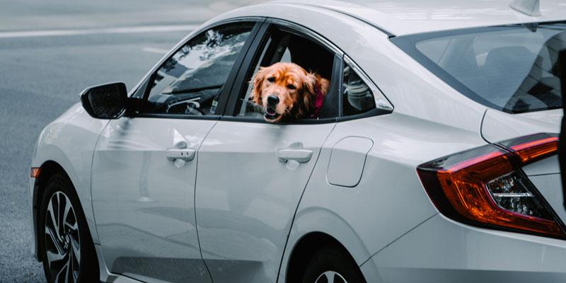 honda buyer, car buyer, auto buyer, in market, trigger direct