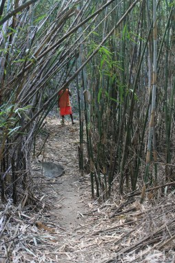 bamboo covered road