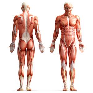 styrketræning til løbere og triatleter, ironman og marathon