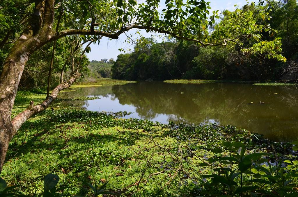 Conheça o Parque Vila Rica do Espírito Santo