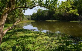 Parque Estadual Vila Rica do Espírito Santo