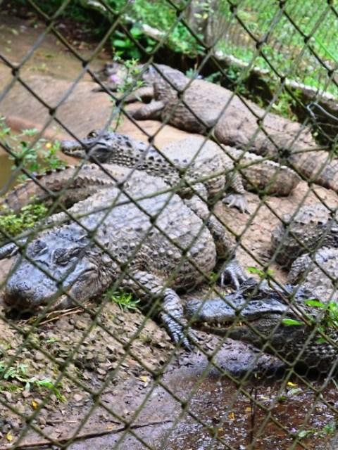 Zoológico Municipal Danilo Galafassi