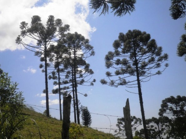 Circuito Italiano de turismo rural- Colombo-PR
