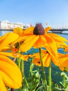 Flowers with Lake Geneva
