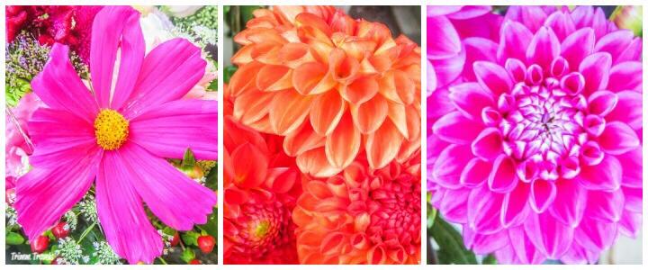 Favorite Things To Do Geneva Switzerland Famers Market Flower Collage