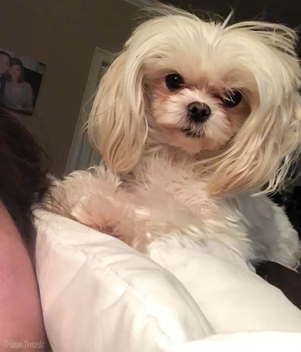The youngest member of our Maltese Mafia is having her 4th Birthday! Celebrate Lexie with us and see all her spoiled craziness!