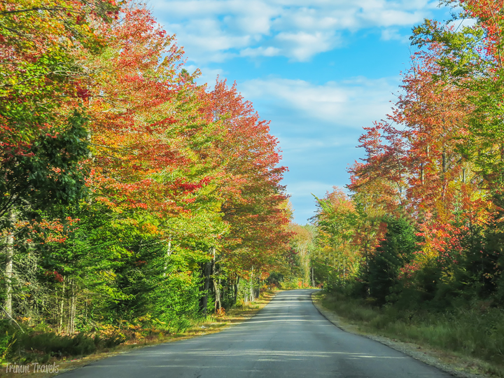 Fall colored leaves on a backroad in Maine
