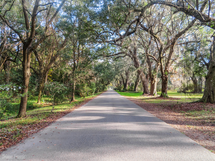 driveway of Magnolia Plantation and Gardens Charleston