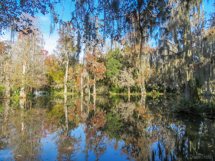 Spanish moss and trees reflecting in perfectly still water in Magnolia Gardens Charleston