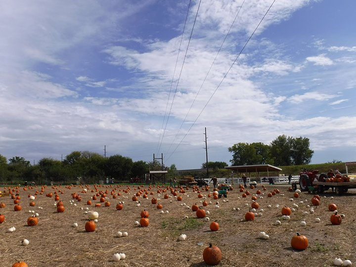 It's pumpkin picking time! Crisp air, pumpkin spice, and candy corn signals the fall season. Get out and have some fall fun at one of these best pumpkin patches in the USA. Check out what makes each of these patches unique and where to find one near you! #pumpkinpatch #pumpkinpicking #pumpkin #usa #unitedstates #kids #family #fall #autumn #fun #october #september