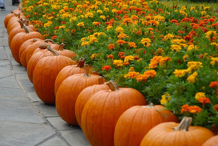 Pumpkin Picking: Best Pumpkin Patches in the USA