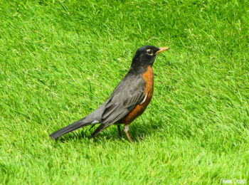 Bird in Butchart Gardens, Victoria, BC, Canada