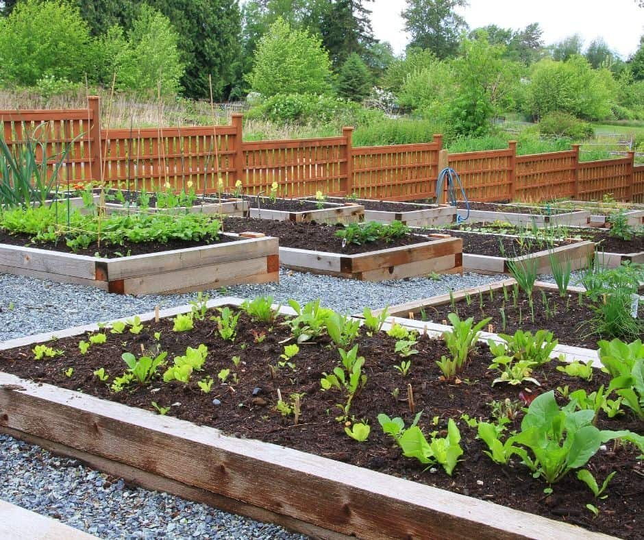 Raised Beds for Victory Garden