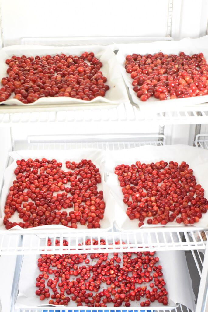 cherries in freezer